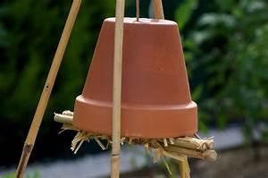 Les insectes sont benefiques pour votre potager en voici for Maison bois et paille 16 les insectes sont benefiques pour votre potager en voici