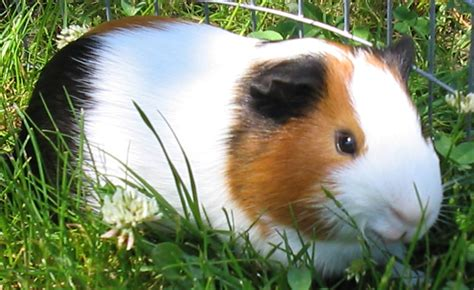 Best First Pets for Kids/Small Animal Category at