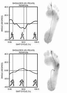 Different Locomotor Pattern Analyzed During The