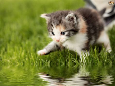 Why Do Cats Hate Water So Much? Pets4homes