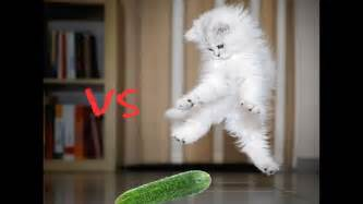 cats and cucumbers cats vs cucumbers funnyhappyvideos