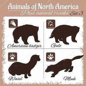 North America animals and animal tracks, footprints ...