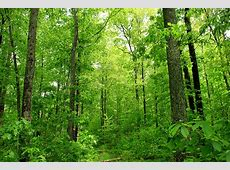 Deep Woods Dense deciduous forest, Pike County, within