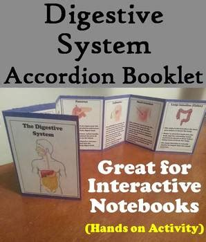 organs   digestive system activity human body