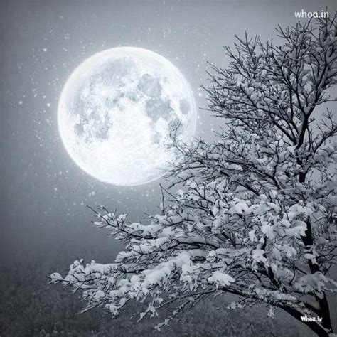 snowy moonlight wallpaper wallpapersafari