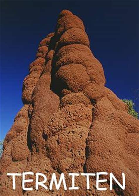 ingrids welt australien fauna termiten