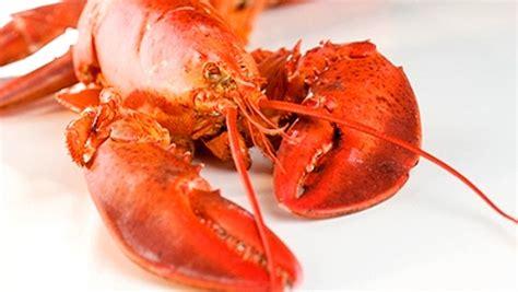 cuisiner le homard congel homard valeur nutritive bienfaits santé et conservation