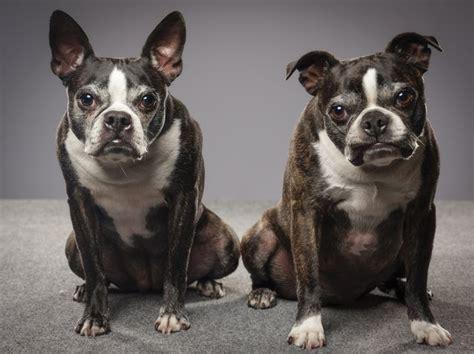 dog humps  leg cuteness
