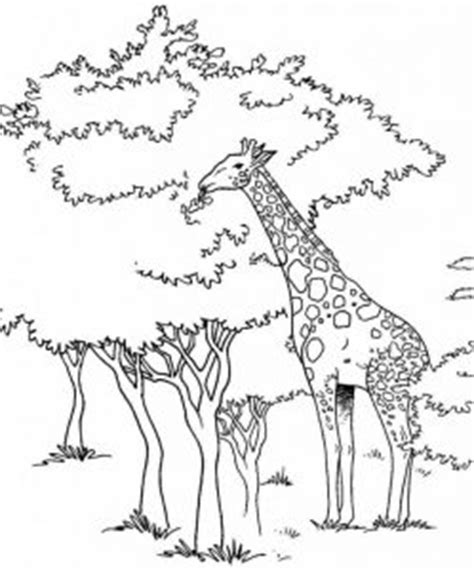 giraffe coloring pages   crafts