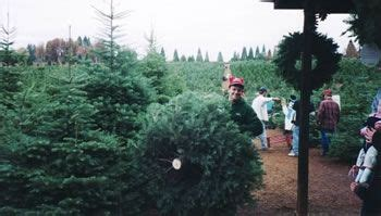 christmas tree farms in sacramento mcgee s tree farm placerville ca sacramento and northern california with