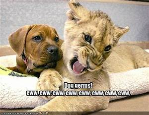 Funny Picture Clip: Funny dog pictures with captions ...