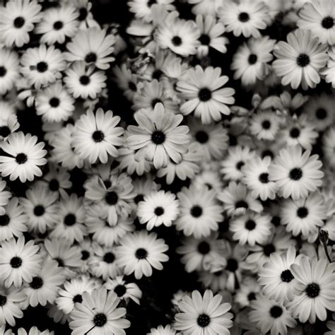 10 new black and white aesthetic wallpaper hd 1080p