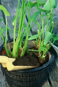 plante de bassin exterieur quelques liens utiles