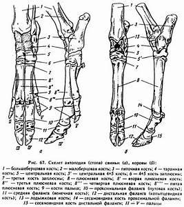 Болят суставы пальцев рук после перелома