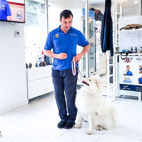 Training of the dogs in Beverly Hills - Master Dog Training