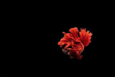 animal photography arizona pet animal photographer