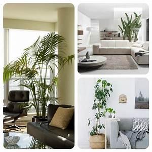 Plante De Salon : plante pour salon ~ Teatrodelosmanantiales.com Idées de Décoration