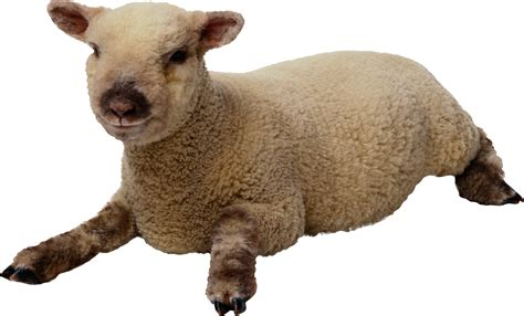 images   clipart sheep png transparent background