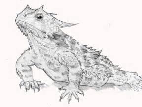 Texas Horned Lizard Drawing