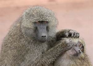 Interesting Facts About Monkeys Funny Pictures Quotes