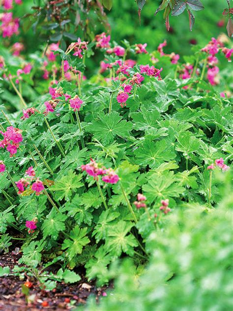 plants for shady areas perennials for shady gardens zone 9 orange county master gardeners