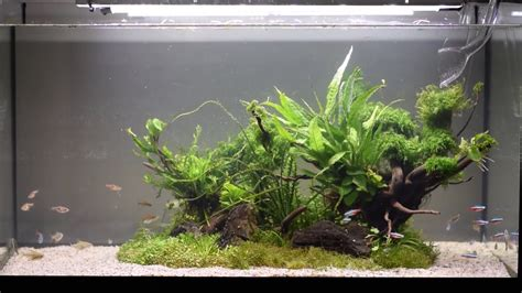 how to make an aquascape the island aquascape maintenance and sand