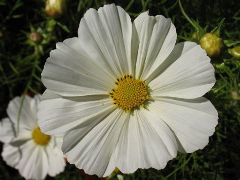 big flowers meditating on grace and thanksgiving john burke
