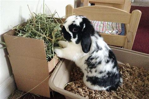 diy hay rack litter box bunny bunny cages house rabbit indoor rabbit
