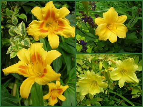 flowers in season summer flower summer flowers in season