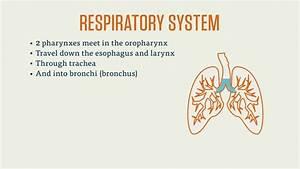 Cpc Exam  Respiratory System
