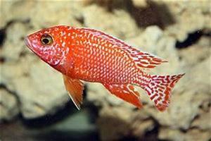 Welche Fische Passen Zusammen Aquarium : fische als haustiere tipps f r das aquarium ~ Lizthompson.info Haus und Dekorationen