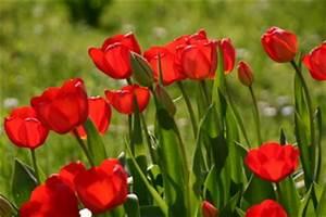 Welche Blumen Blühen Im August : 4teachers lehrproben unterrichtsentw rfe und unterrichtsmaterial f r lehrer und referendare ~ Orissabook.com Haus und Dekorationen