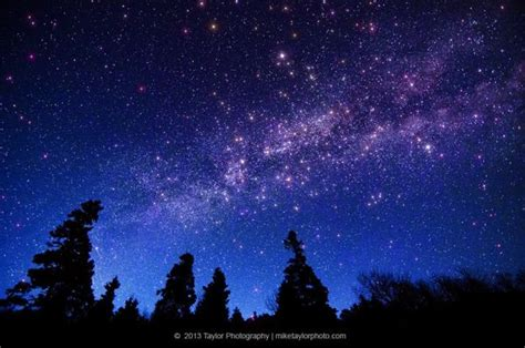 Stars Forests Incredible Astrophotography Mike Taylor