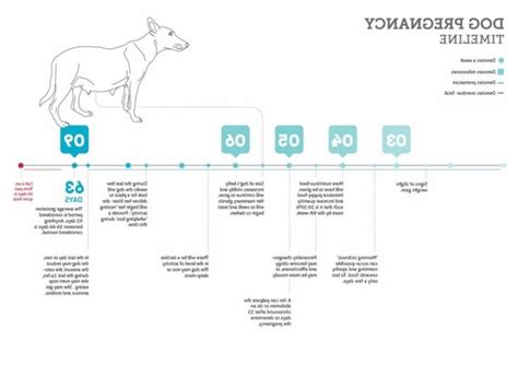 gestation period for dogs 25 best ideas about gestation period on pinterest baby shower activities baby shower list