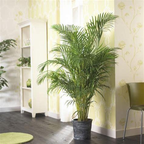 palmen ueberwintern mein schoener garten