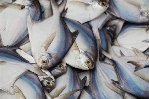 fda epa issues  guidance  fish consumption