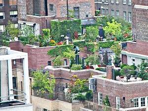 What to consider before planting a rooftop garden for Rooftop gardening