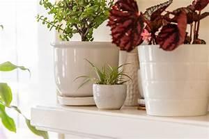 8, Best, Indoor, Plants, To, Refresh, Your, Home