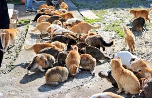 cat island japan s cat island asks for food gets more than