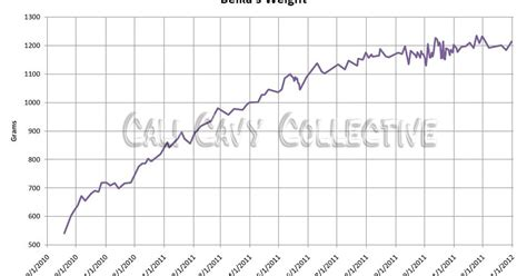 cali cavy collective  blog    guinea pig guinea pig weight charts