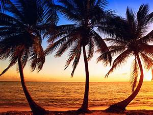 Bilder Von Palmen : bilder vom sonnenauf sonnenuntergang als romantik kalender ~ Frokenaadalensverden.com Haus und Dekorationen