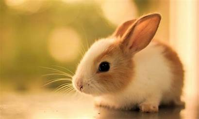Rabbit Wallpapers Rabbits Background Young