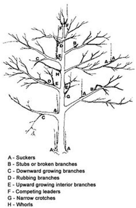 43 Best Pruning fruit trees images | Fruit trees, Pruning