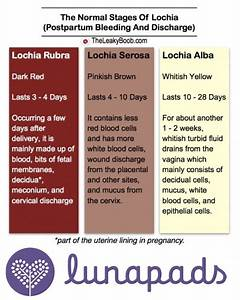 Heavy 16 Feeding Chart Everything You Need To Know About Postpartum Bleeding And