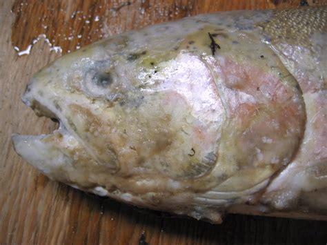 Cbstwfungus2 Fish Pathogens