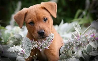 Puppy Desktop Wallpapers Dog Funny