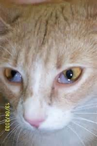 cats third eyelid cat s eye is covered by a white thing ask a vet