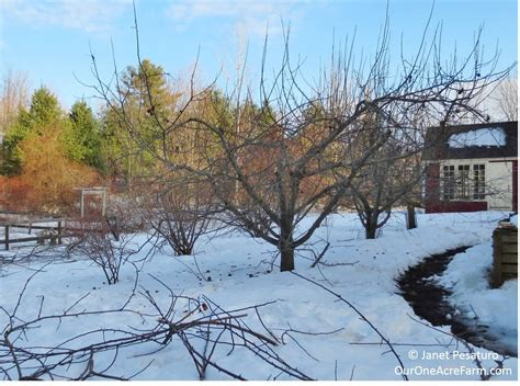 pruning apple trees in autumn how to grow apples without pesticides