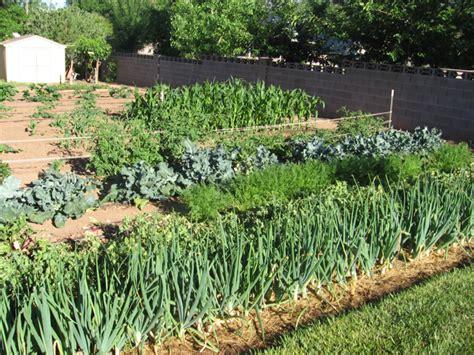 Rex's Tips For A Mixed Vegetable Garden