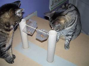 Katzenspielzeug Selber Machen Karton : katzenbesch ftigung selber basteln dansenfeesten ~ Frokenaadalensverden.com Haus und Dekorationen